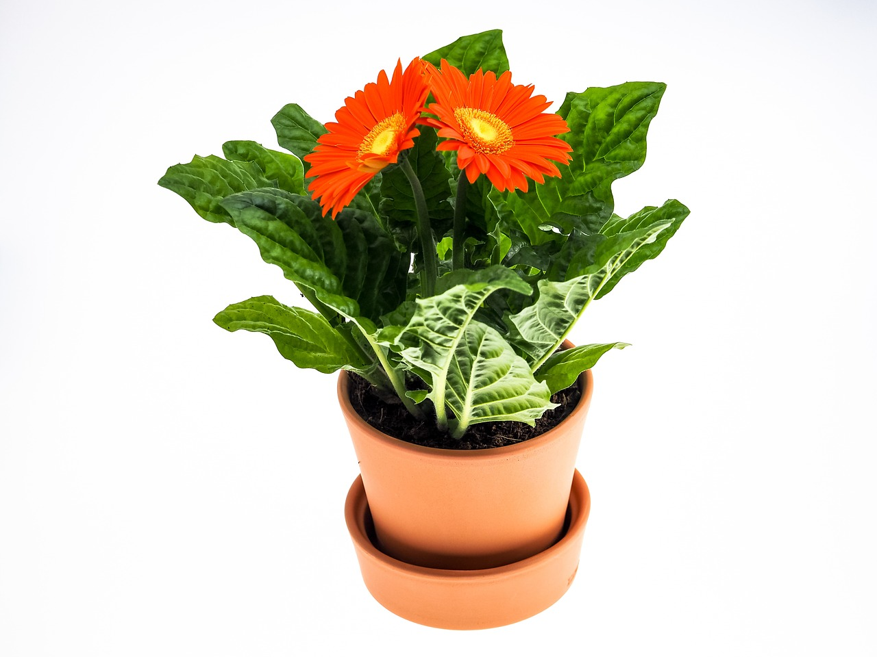 Blumenaktion Konzil